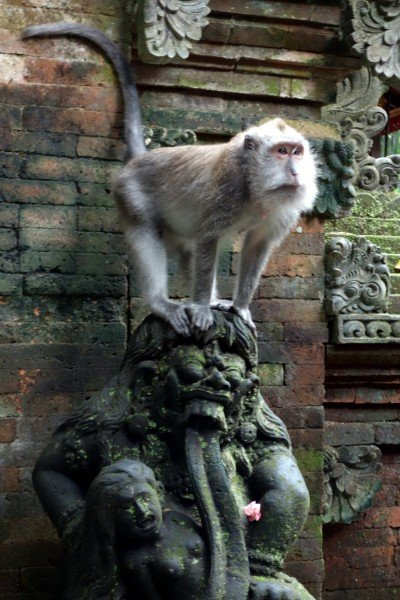 Want to just monkey around like this guy in Ubud?  Go for it!