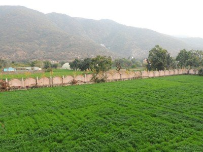 The greenest gardens (this is wheat) behind our hotel.