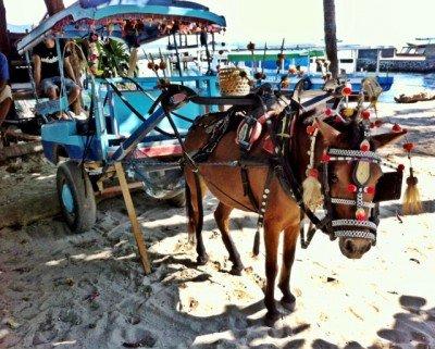 A horsecart of Gili T.