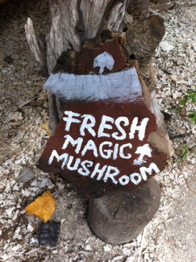 One of the less vulgar signs for mushrooms we saw on the island.