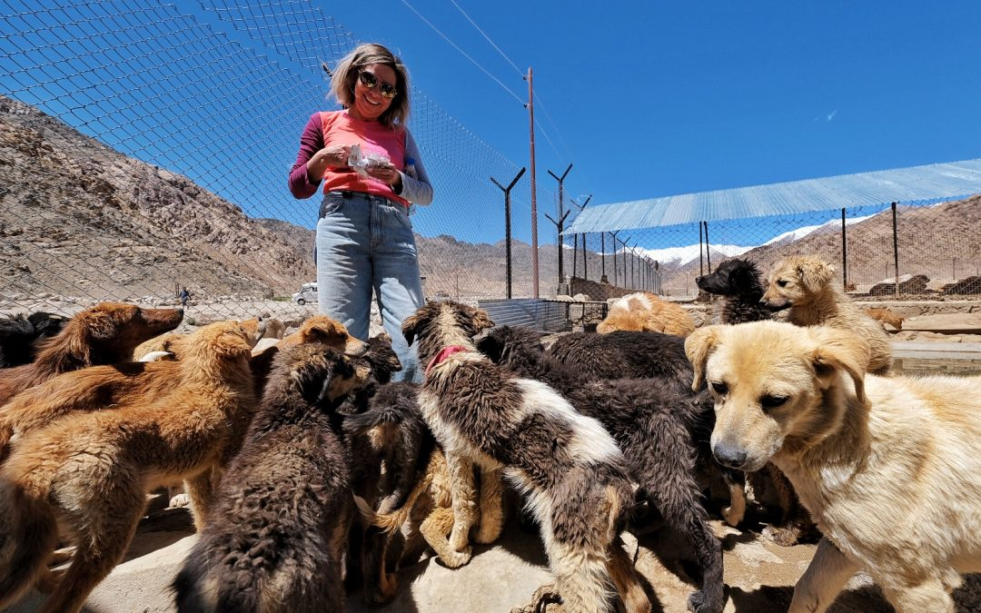 Treat, Spay, Love: Volunteering with Street Dogs in Ladakh 2019