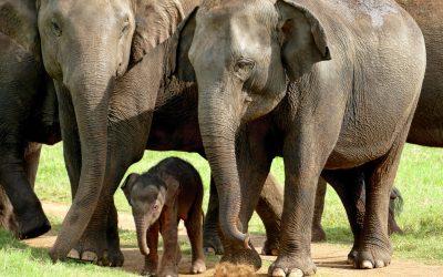 Elephants aren't for riding